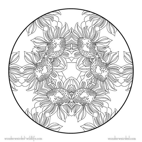 Sunflower mandala 5 free printable flower mandala coloring