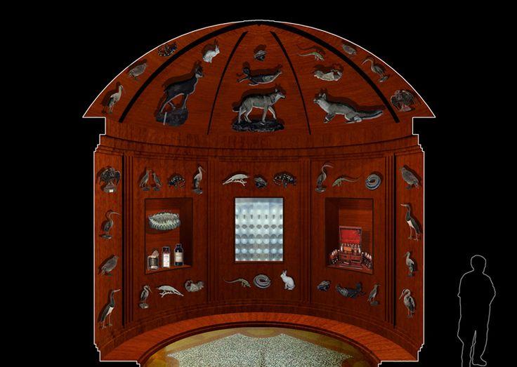 Progetto, Raccogliere per stupire, raccogliere per studiare, Wunderkammer, Museo Storia Naturale, Venezia