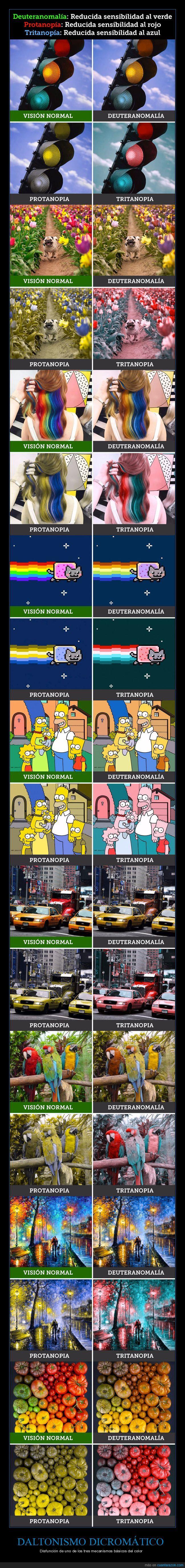 Así es cómo ven el mundo las personas con distintos tipos de daltonismo