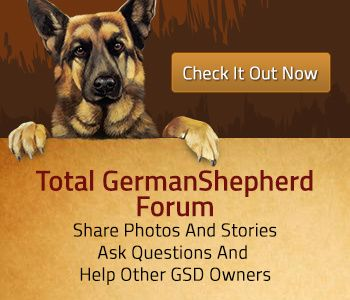German Shepherd Names - Male And Female German Shepherd Dog Names