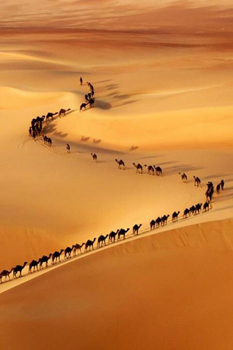 Camel Train.  Photographed from a helicopter during a location scout on the border of Saudi Arabia and UAE | ©Josh Owens