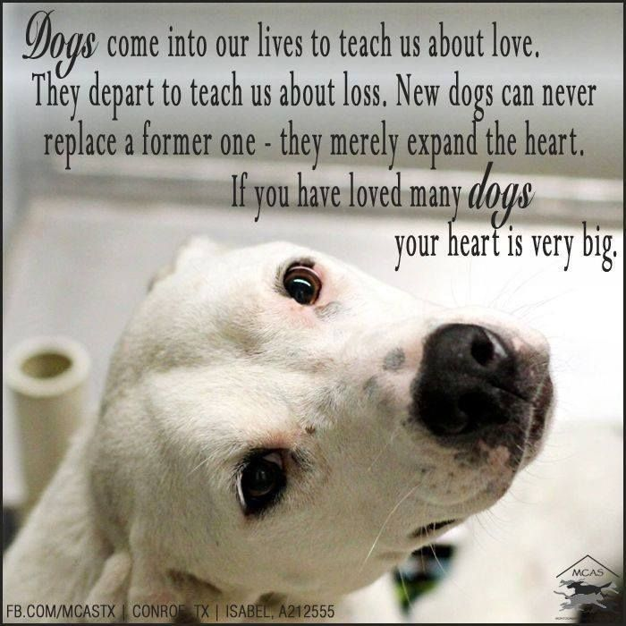 My Dog Loves Me Quotes: Quotes For Pets That Have Passed Away