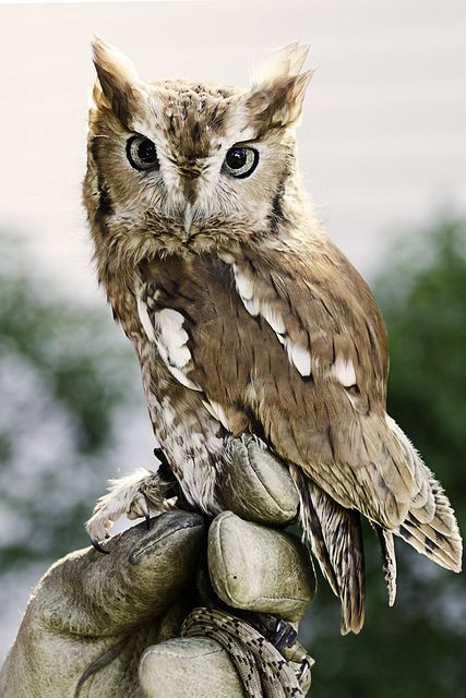Screech owl, oh, I'm in love.