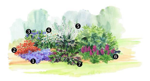 111 best Zone 3 Plants & Flowers images on Pinterest ...