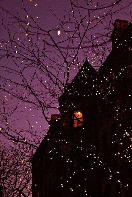 dreaalghul:    Leaf-less trees with white christmas lights are one of the most romantic things to be around.    ∞