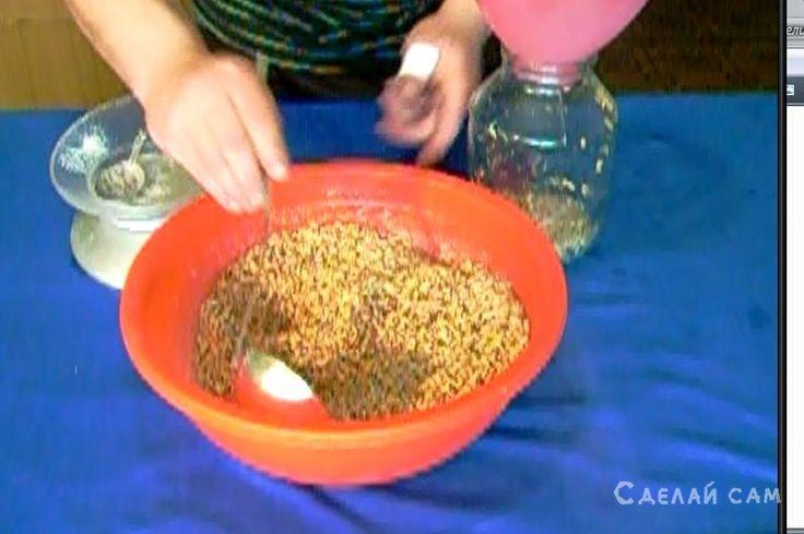 Приготовление зернового мицелия в домашних условиях   Сделай Сам www.sdelay.tv