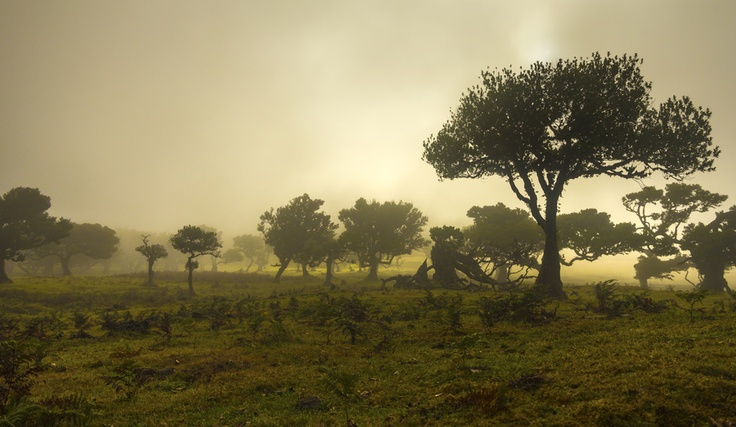 Ents by Danny Rodrigues, via 500px