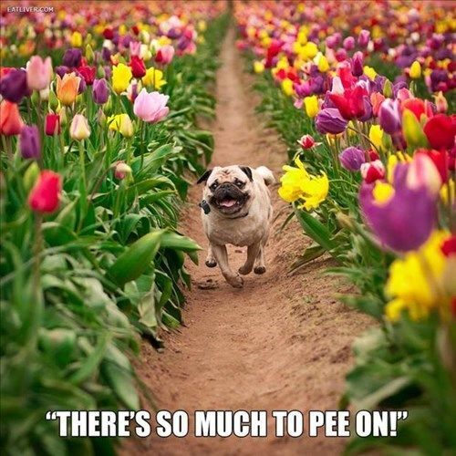 Tulip Fields Bring all Kinds of   Happiness