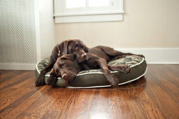 Pet News | 4 Tips for Choosing the Perfect Dog Bed | Pets Best