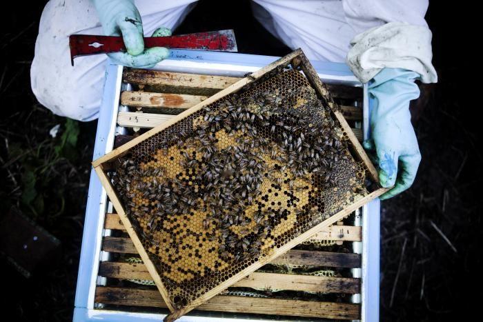 Biavler: 'Jeg følte sorg, da jeg åbnede bistaderne' 'Einstein har engang udtalt, at fra den sidste bi dør, har vi fire år tilbage på jorden at leve i. Det er måske i overkanten, for honningbier er jo ikke den eneste bestøver. Men jeg ser bidøden som et advarselstegn fra naturen,' siger Klaus Hviid, efter at en opgørelse viser, at hver femte bifamilie døde denne vinter