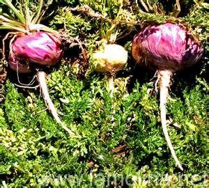 amazon herbal plants - Bing images