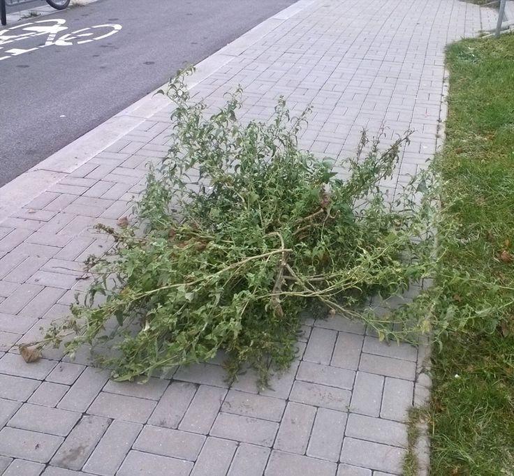 """Zieleń miejska na DDR #rower #Lublin"""