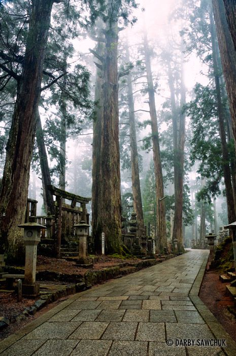 A path through the forest cemetery at Okunoin temple in Mount Koya, Wakayama, Japan