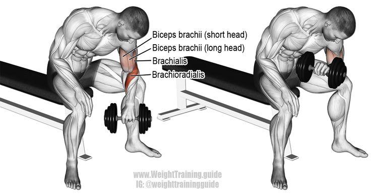 Curl de concentración con mancuernas agarre inversa. Los músculos trabajaron: Brachioradialis, Biceps Brachii, y Brachialis..