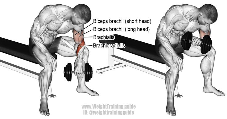 Dumbbell reverse grip concentration curl. Muscles worked: Brachioradialis, Biceps Brachii, and Brachialis.
