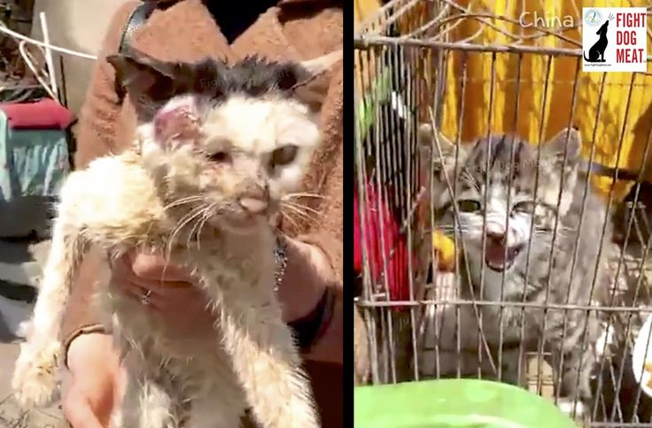 China people eating female cat placentas in zhejiang in