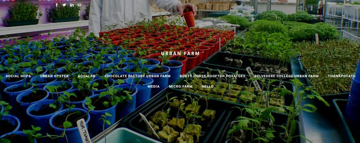 """URBANFARM aims to inspire people to adopt sustainable practices in their everyday lives.  """" You'll never plough a field by turning it over in your mind """"  © Urban Farm Organics 2012-2018 All rights reserved #Urbanfarm #Sustainable #Growth"""