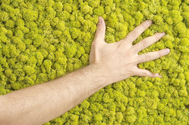 To prawdziwy mech, który może rosnąć w łazience np. na ścianach. Nie trzeba go pielęgnować, podlewać, nawozić – zapewnia producent.