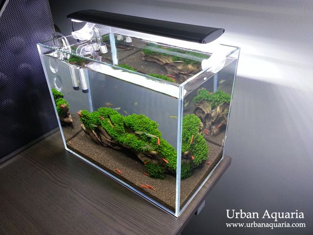Best 25 fish tank decor ideas on pinterest fish tank for Outdoor fish tank for sale