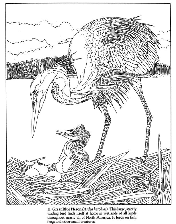 Coloring Pages Of Wetland Animals Wetland animals colouring pages