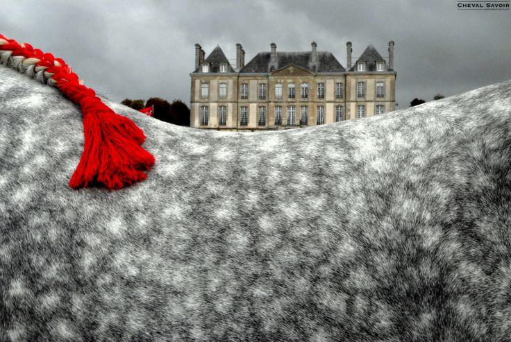 Percheron | Au Haras du Pin : le 15ème Congrès Mondial du Cheval Percheron