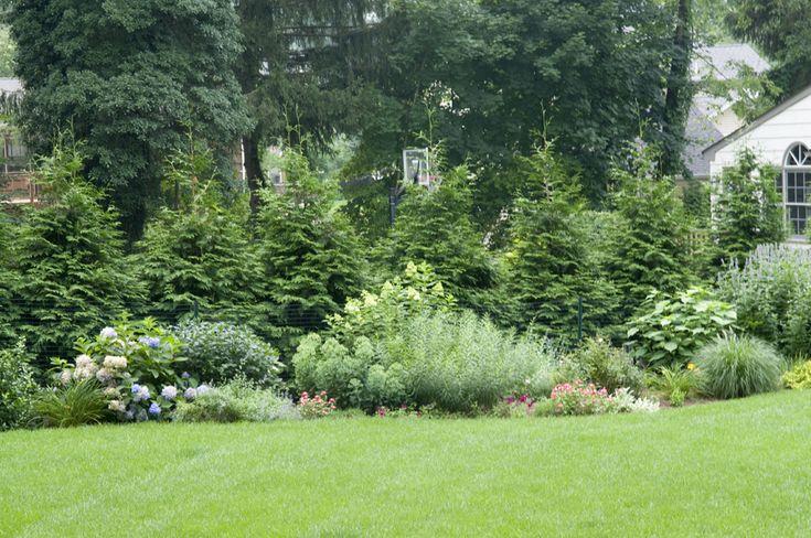 Organic Tree And Shrub Care Company Nj Slope