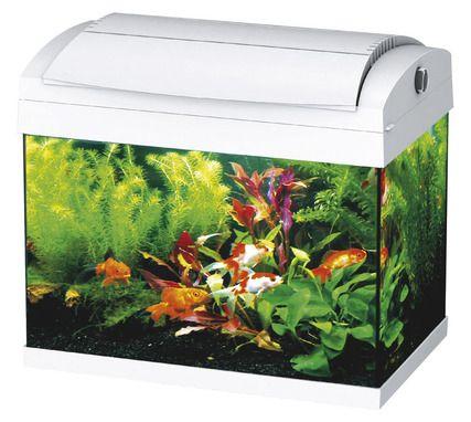 17 meilleures id es propos de aquarium pour poisson for Aquarium poisson rouge sans pompe