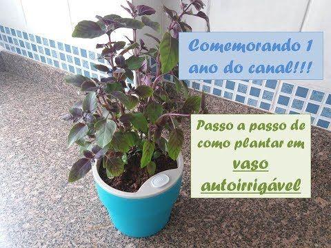 PLANTANDO EM VASO AUTOIRRIGÁVEL | 1 ANO DO CANAL! | Pin me!