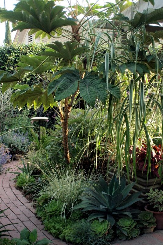 Small tropical garden ...Denise @ A Growing Obsession Blog.