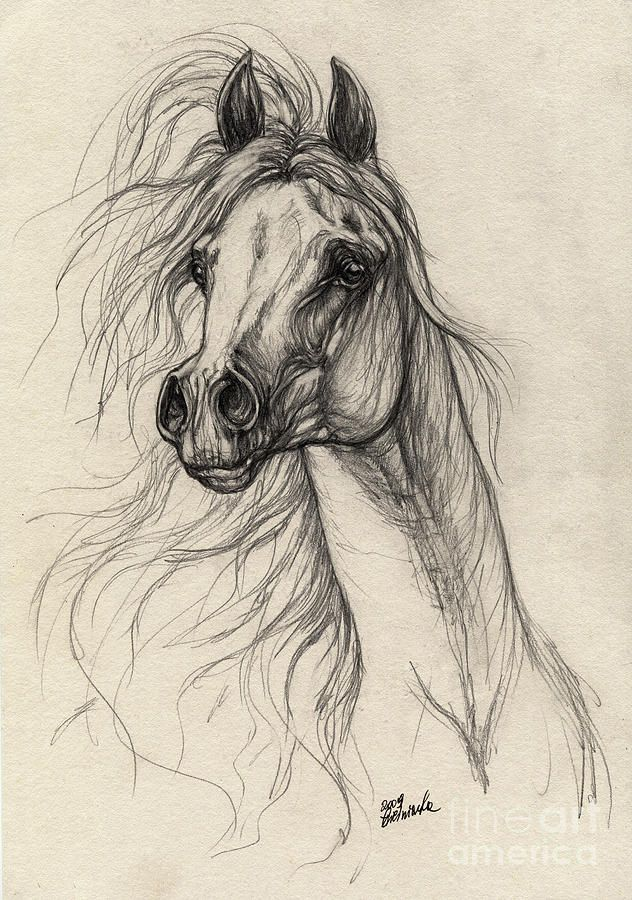 Arabian Horse Drawing 37 Drawing - Arabian Horse Drawing ...