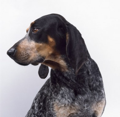 Meet the Puppies: 15 of the American Kennel Club's Newest ...