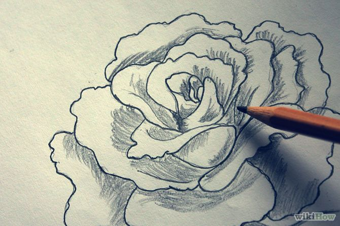 How to Shade a Flower Rose when Drawing With a Graphite Pencil