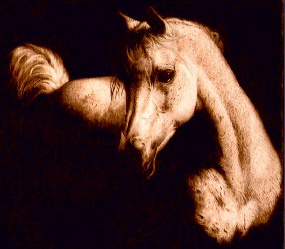 ARIANNA STATUTI  Cavallo nell'ombra, pirografia su pioppo,  27x19 cm.   2011.