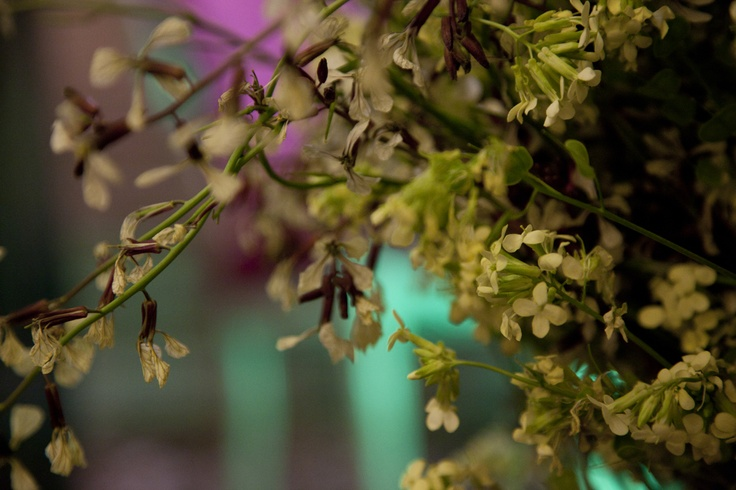 Flores decoración cata de vino Cadena Ser por alcoper concept.