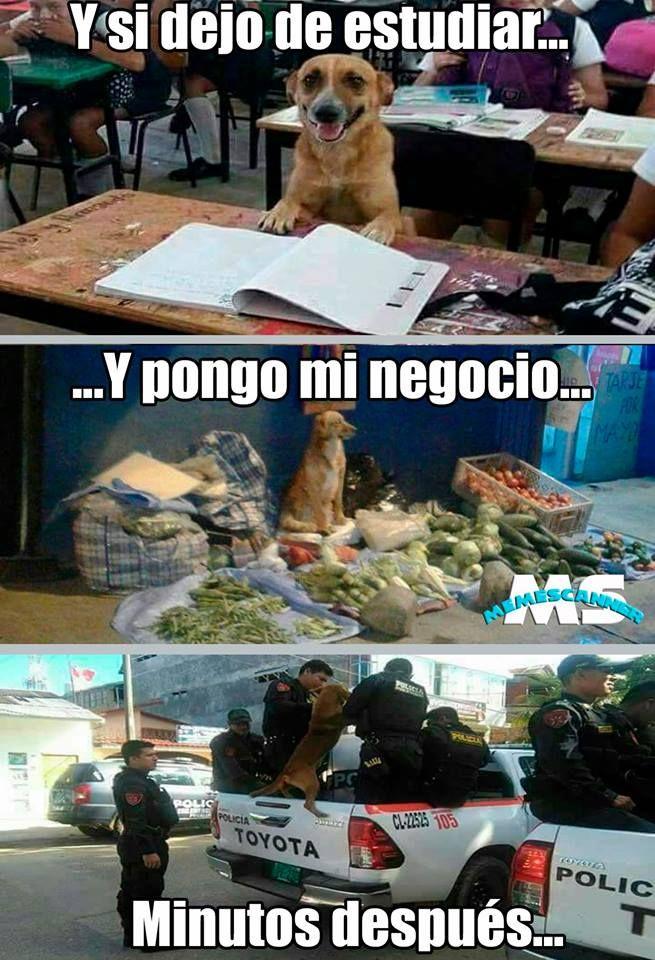 Algunos Animal Memes Funny Memes Memes