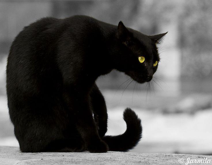mačka čierna - Hľadať Googlom