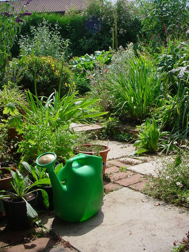 Gardening on a Budget 10 Low Cost