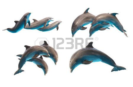 dolphin: set of jumping bottlenose dolphins isolated on white background
