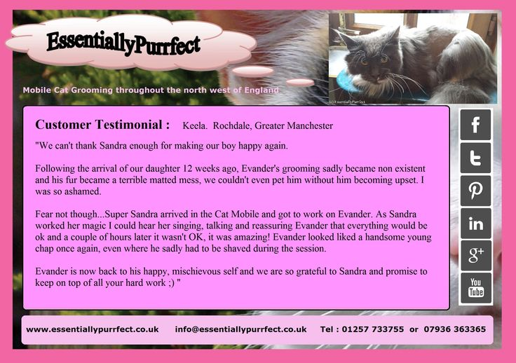 Customer Testimonial of EssentiallyPurrfect #mobile #MaineCoon #cat #catgrooming service. Keela #Rochdale #Manchester