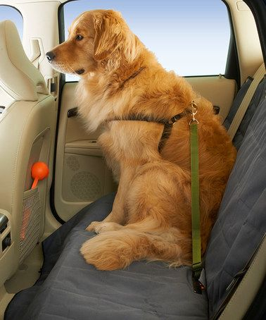 Look what I found on #zulily! Green Seat Belt Tether #zulilyfinds