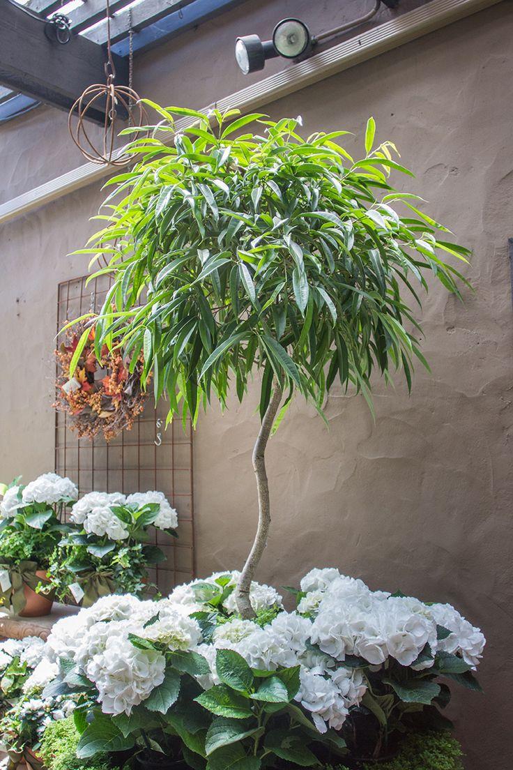 133 Best Indoor Plants Images On Pinterest Indoor House 400 x 300