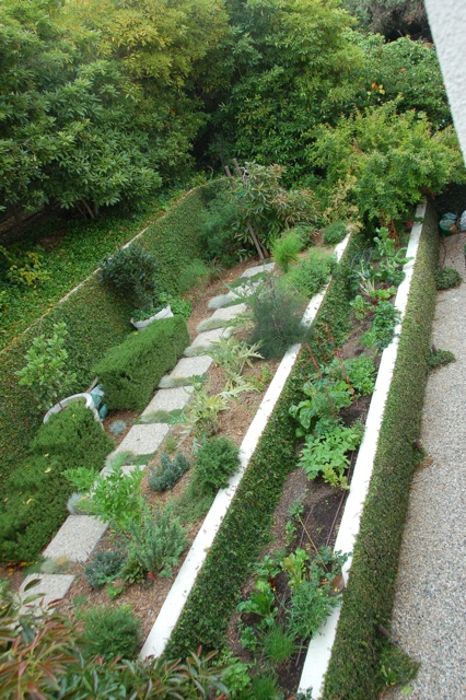 A modern kitchen garden from Star Apple Edible Landscaping. Modern Potager (ornamental vegetable/kitchen garden)