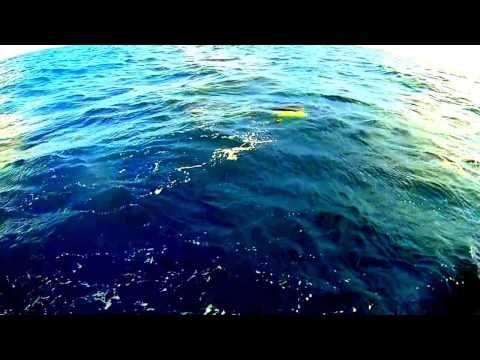 Fishing Miami Action - Big SaltFish