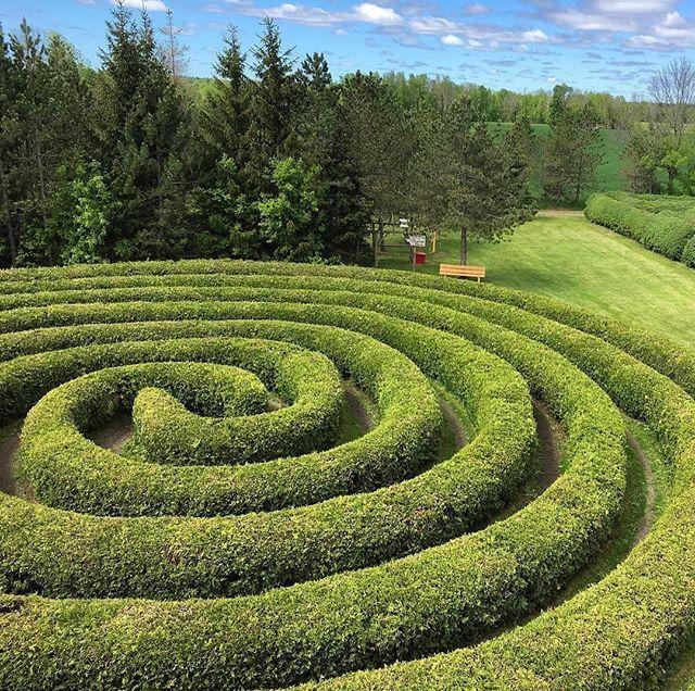 """@roaring_20s_affair guests can get lost in a maze thanks to a generous donation from @saundersfarmfun! #roaring20swish #roaring20s #roaring20saffair #1920s #1920stheme #1920saffair #gift #june #summer #swing #jazz #charity #children #childrenswishfoundation #kids #farm #green #maze #algonquin #ottawa #ontario #ottawa150 #ottawaevents #events #party #partner #eventplanner"" by @roaring_20s_affair.  #bride #weddingday #weddingdress #weddingphotography #bridal #weddinginspiration…"
