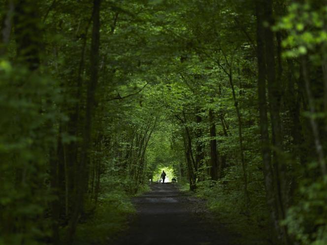 Une femme promène ses lévriers dans un bois de Ferney-Voltaire, en France, près de la frontière suisse.