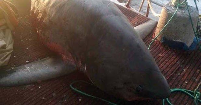 Απίστευτες εικόνες στην Αργολίδα: Πήγε για ψάρεμα και έπιασε… καρχαρία