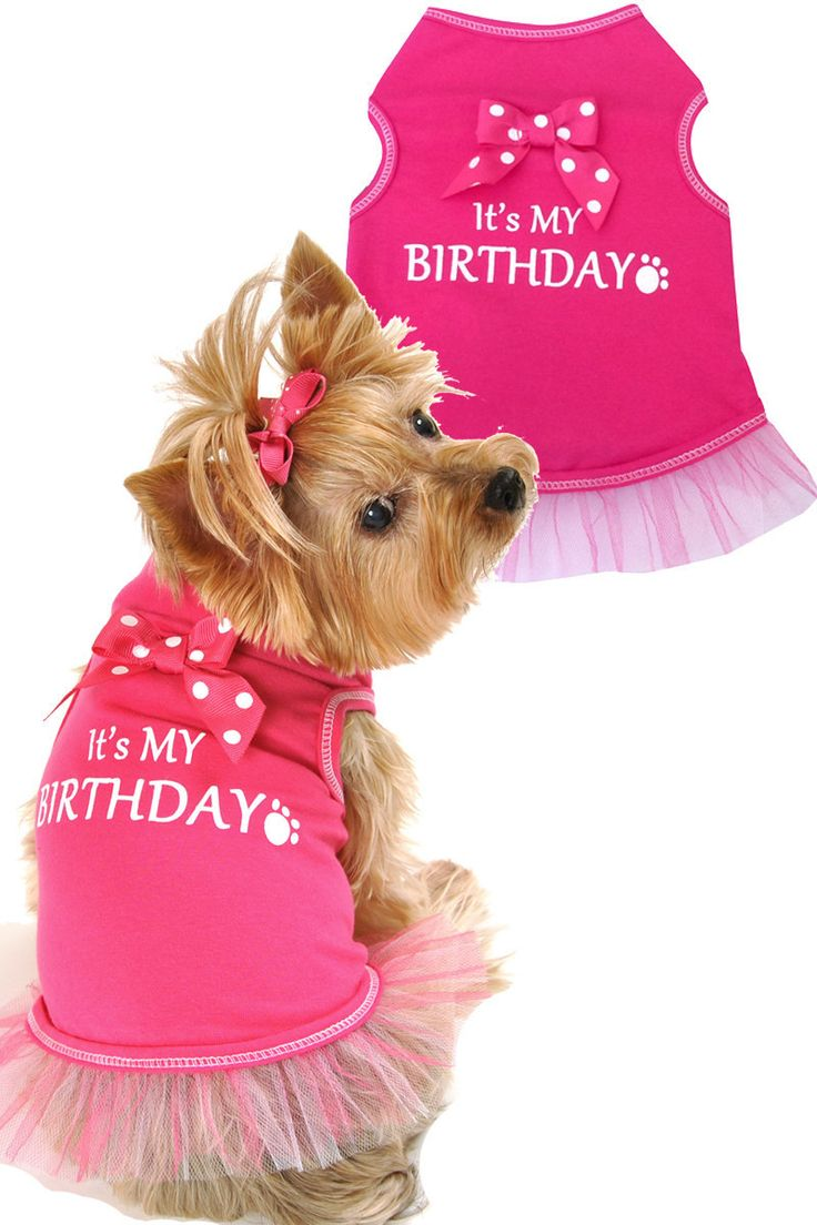 August birthday month my august birthday month quotes quotesgram - It S My Birthday Let S Celebrate Your Furry Child Will Look Amazing And Festive At