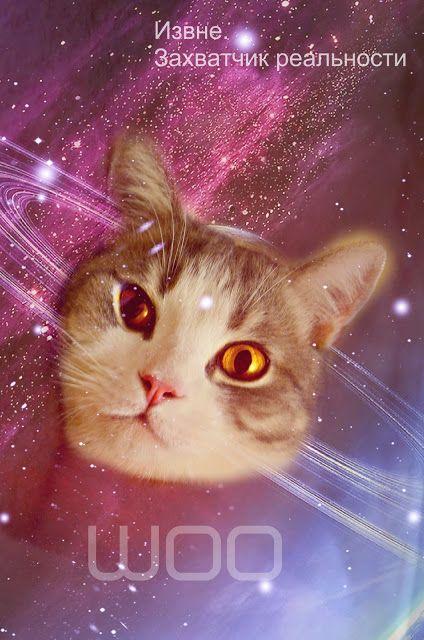 patrik, cat, beauty cat, scottish stright, gold eyes, patrik cat, шотландский кот, шотландец прямоухий, красивый кот, патрик, золотые глаза, space cat
