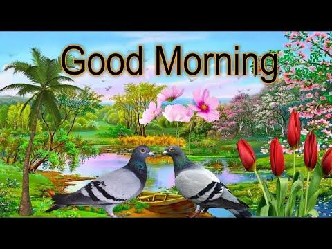 GOOD MORNING Wishes Video - Whatsapp /Lovely & Beautiful VideoEcard/Images/Greetings/ - YouTube