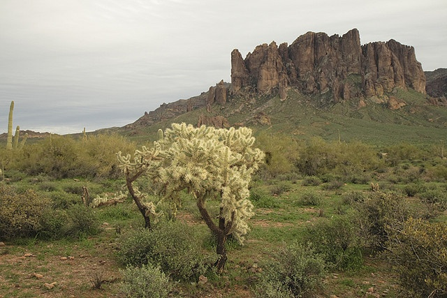 Cholla and Superstition Mountain: Afternoon Photos
